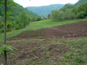 panorama del campo seminato ora comincia germogliare