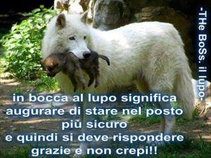 Evviva il lupo!