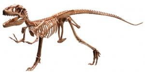Immagine da: http://imgarcade.com/1/dinosaur-t-rex-fossil/